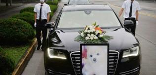 pogrzeb psa audi