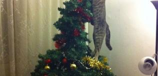 Koty kontra choinka