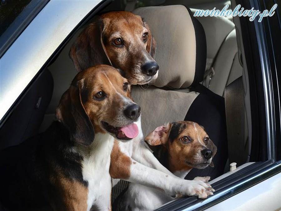 Psy w autach