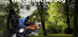 Connected Dog
