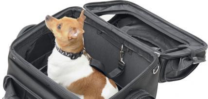 Motocyklowa torba transportowa dla zwierzaka